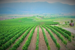 Bulgarian Wine Tours