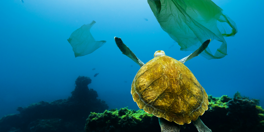 Plastic Waste in our Oceans